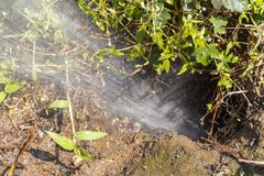 A Burst water Pipe. A Close up view of water spraying out a burst pipe under the ground in an outside garden stock image
