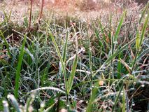 Wet green grass with morning dew drops on spring time. Close up view of wet green grass with morning dew drops on natural spring environment stock photos