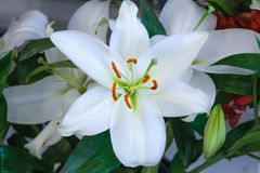 View of white lilies bouquet stock images