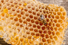 Close up view of the working bee on the honeycomb with sweet hon Royalty Free Stock Photo