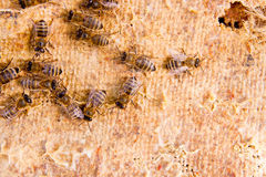 Close up view of the working bees. Stock Photography