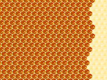 Close up view of the working bees on honey cells Stock Photography