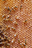 Close up view of the working bees Stock Photos