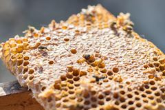 Close up view of the working bees on honeycells stock image
