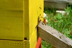 Working bees in yellow bee hive stock images