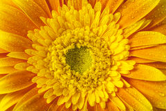 Close up view of yellow flower Stock Image