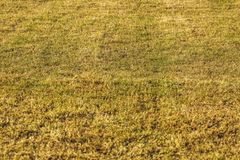 Close up view of young grass field in sunnny spring day. Beautifull nature texture backgrounds.  royalty free stock photography