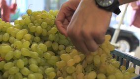 Close up view of young man hands choosing the grapes at the fruit market. Close up view of young man hands choosing the fruits at the fruit market stock footage