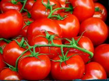 Brilliant Red Vine Ripe Tomatoes royalty free stock photography