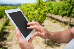 Close-up of vintner using digital tablet in vineyard. On a sunny day Royalty Free Stock Photos