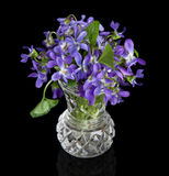 Close-up of violet flowers in a vase Royalty Free Stock Photography