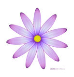 Close up violeta da flor Fotografia de Stock Royalty Free