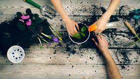 Close-up volwassen handen die onlangs geplante bloemen water gaven Concept het planten van bloemen stock video