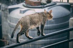 The cat at the balcony stock photos