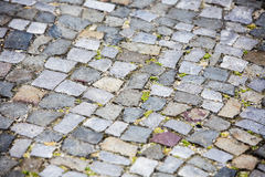 Close up of walkway with gray cobblestones royalty free stock photo