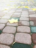 Close-up of a walkway in a park with yellow leaves. Royalty Free Stock Image