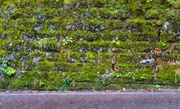 Close-up of a wall with moss 3. Beautiful close-up of a wall with moss, with the presence also of small green plants 3 royalty free stock images