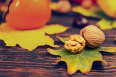 Close up of walnuts lying on tree leaf, autumn harvest as backgr. Ound. Mockup for seasonal offers and holiday post card Stock Photography