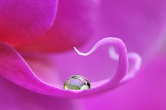 Close-up of a water drop on a phalaenopsis Stock Images