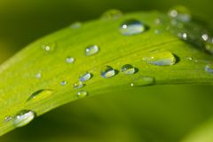 Close up of water droplets on grass leaf. Beautiful nature background Stock Image
