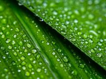 Close-up of water droplets on the green plant stock photo