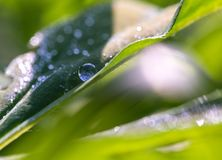 Close up of water droplets on leaf Royalty Free Stock Photo