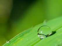 Close up Water drops on fresh green grass background,Blank top a Royalty Free Stock Image