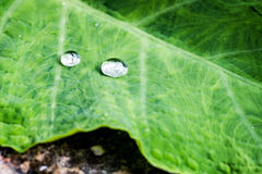 Close up of water drops on leaf Stock Photography
