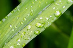 A close-up of water drops on leaves royalty free stock photos