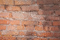 Close up of a water drops. On a red old brick background, covered with drops of water -condensation Stock Image
