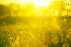 Close up of water drops reflection in fresh green grass illuminated by golden warm light of rising sun royalty free stock photos