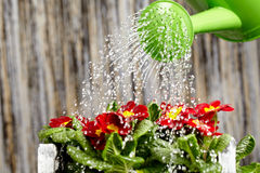 Close up on water pouring from watering can Royalty Free Stock Images