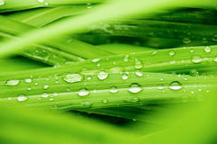 Close up water rain drop on green leaf for nature texture background Stock Photography