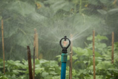 Close up of  water springer  spraying water. Royalty Free Stock Photography