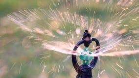 Close up water sprinkler spray watering stock video footage