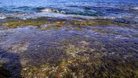 Close-up of water. Waves breaking on beach over rocks and algae stock video