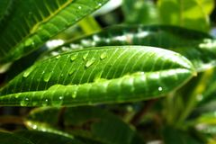 Close up waterdrops of the fresh green leaf. An ecology green frame stock image
