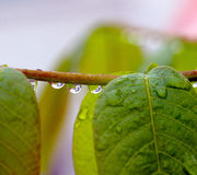 Close up of waterdrops on a plant. Picture of a close up of waterdrops on a plant stock photo