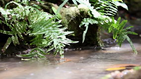 Close-up waterfall. Deep in mountain forest stock video
