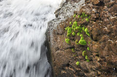 Close up of waterfall Stock Photography