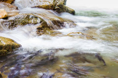 Close up of waterfall in Namtokphlio National Park Royalty Free Stock Images
