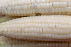 Waxy corn in wooden plate. Close up of waxy corn in wooden plate royalty free stock images