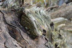A close up of a weathered tree stump. Detailed image of a patterned tree stump Stock Image