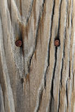 Close up of weathered wood with rusty nails Royalty Free Stock Photography