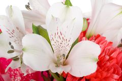 Close-up wedding bouquet Royalty Free Stock Photo