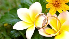 Close up wedding gold rings on the Thai flowers stock video footage