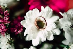 Wedding rings on a flower. Close up Wedding rings on a white flower Stock Photography