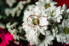 Wedding rings on a flower. Close up Wedding rings on a white flower Stock Photo
