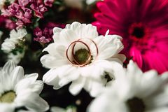 Wedding rings on a flower. Close up Wedding rings on a white flower Royalty Free Stock Photography