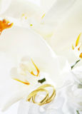 Close up on wedding rings and white orchid. Close up on wedding bouquet and rings Royalty Free Stock Photos